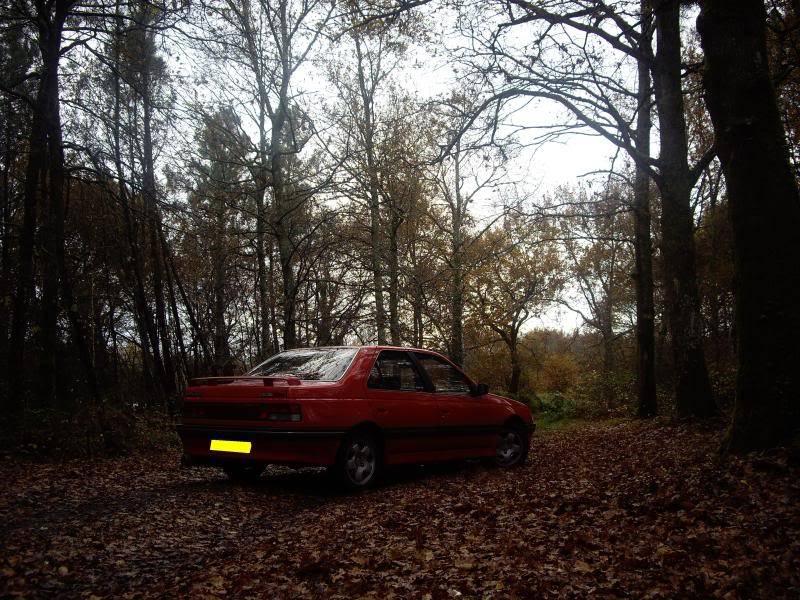 Daredevil dans les bois...23-11-08 IMGP8221