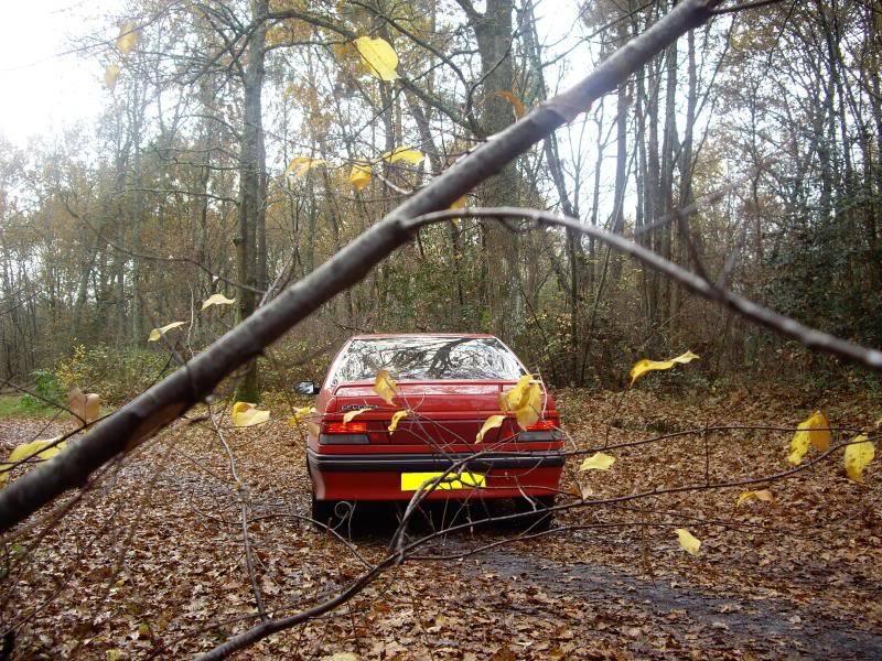 Daredevil dans les bois...23-11-08 IMGP8223