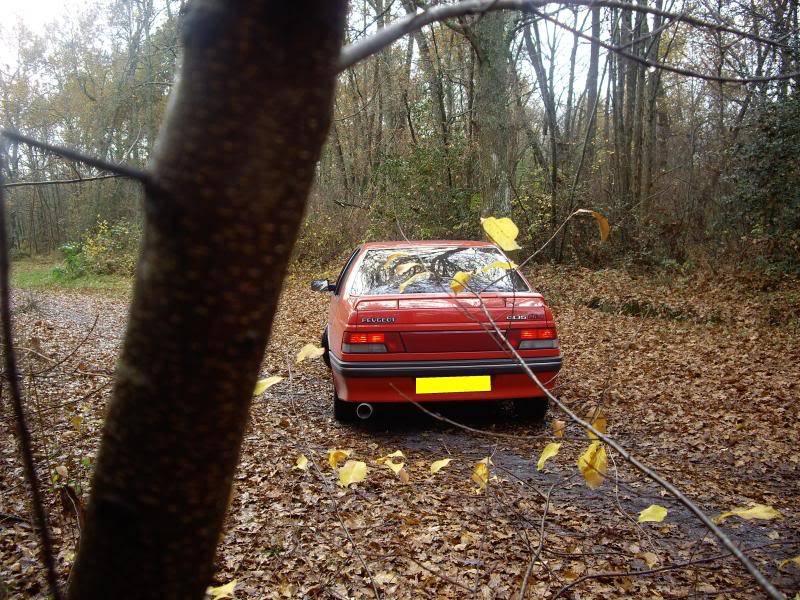 Daredevil dans les bois...23-11-08 IMGP8224