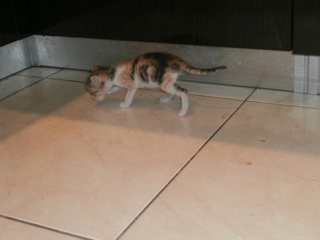 Τι κάνουμε αν βρούμε ένα μωρό γατάκι στο δρόμο - Σελίδα 10 004_zps63omze4s