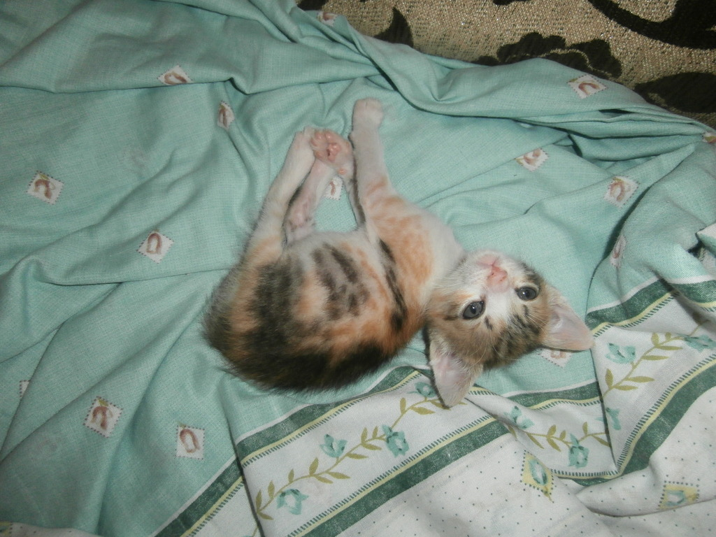 Τι κάνουμε αν βρούμε ένα μωρό γατάκι στο δρόμο - Σελίδα 10 004_zpsg0ed1ss3
