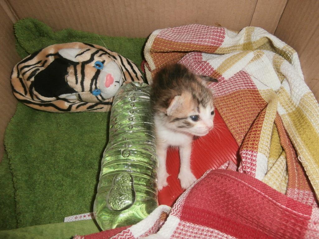 Τι κάνουμε αν βρούμε ένα μωρό γατάκι στο δρόμο - Σελίδα 9 005_zpsgmb2np9h