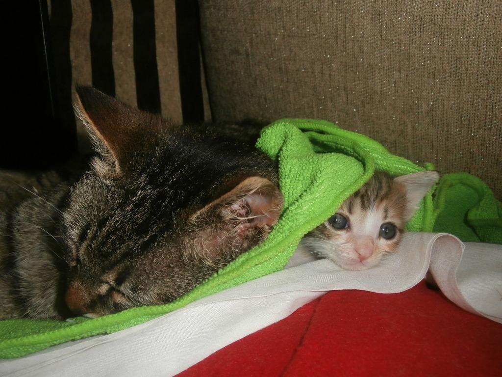 Τι κάνουμε αν βρούμε ένα μωρό γατάκι στο δρόμο - Σελίδα 10 012_zpswyzbwapf