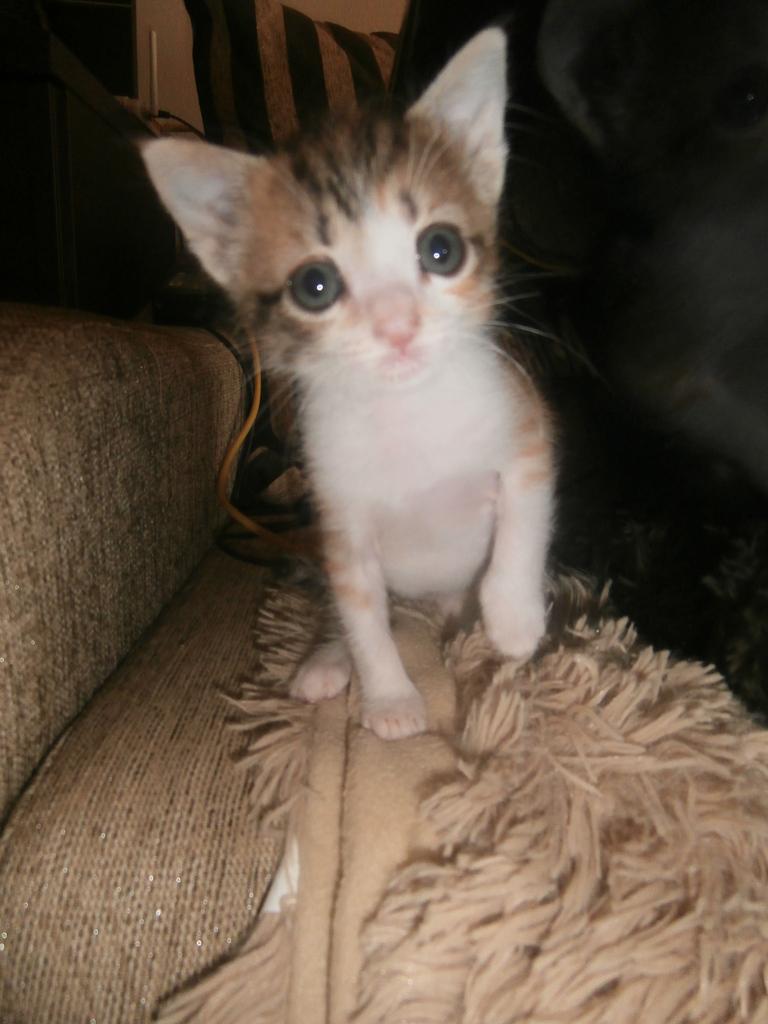 Τι κάνουμε αν βρούμε ένα μωρό γατάκι στο δρόμο - Σελίδα 10 014_zpsz4pdwtoh