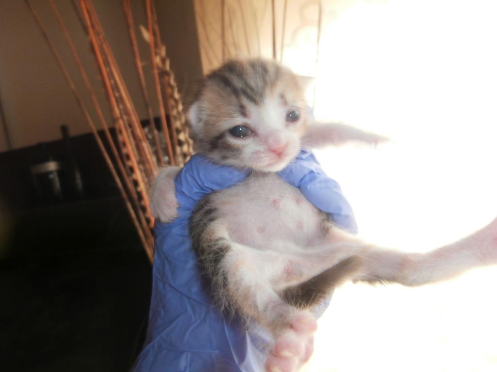 Τι κάνουμε αν βρούμε ένα μωρό γατάκι στο δρόμο - Σελίδα 8 037_zpstcds6r94