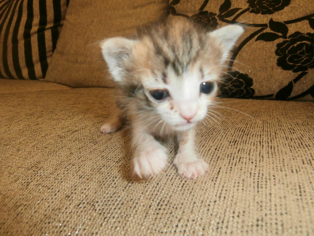Τι κάνουμε αν βρούμε ένα μωρό γατάκι στο δρόμο - Σελίδα 9 045_zpsjewuq8z8
