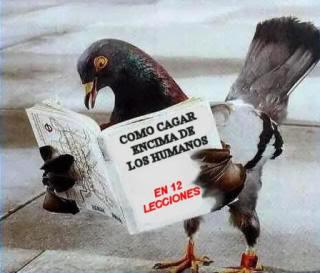 Imagenes graciosas Pajarocomocagar