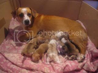 Perrit@s adorables buscan mamas y papas =) GetAttachment5