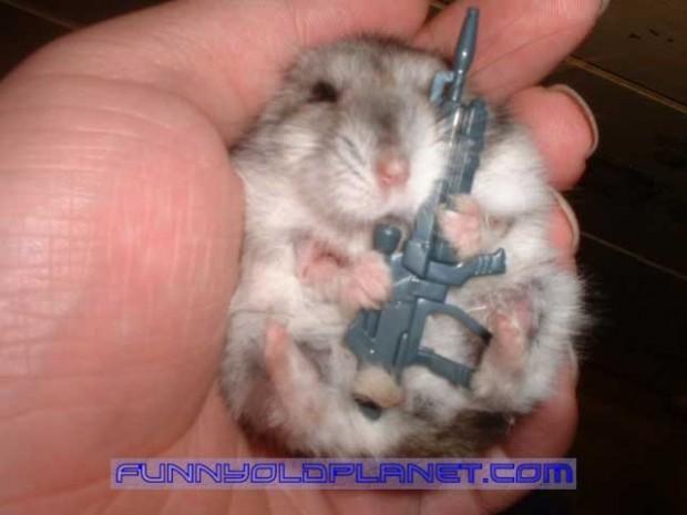 Damn Peep Combat-hamster-620x465_zps7a95d6fe