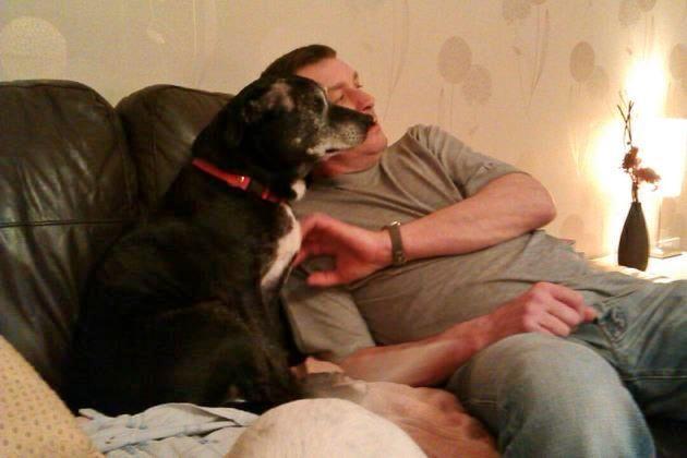Thelma - 10yr old Staffy girl - dog and cat friendly! - Senior Staffy Club - Tamworth area 484946_581449065200699_2001848705_n_zps39faab6b