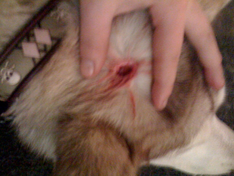 Zoey's puncture wounds.. Photo4-6
