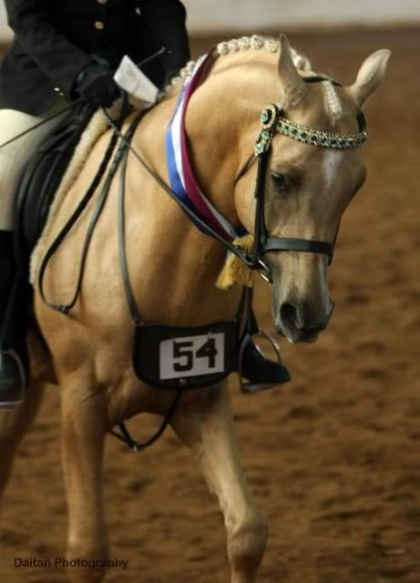 Esaskia Golden Sunquest StateChampionRiddenStallion