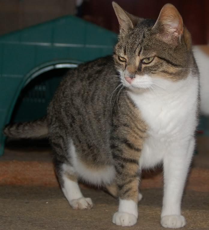 ANIA gatina de 8 meses en adopción – CF (Asturias) Ania4