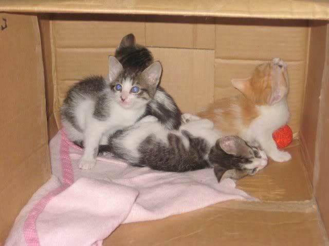 Cuatro bebitos en adopción (CF-Asturias) IMG_5398