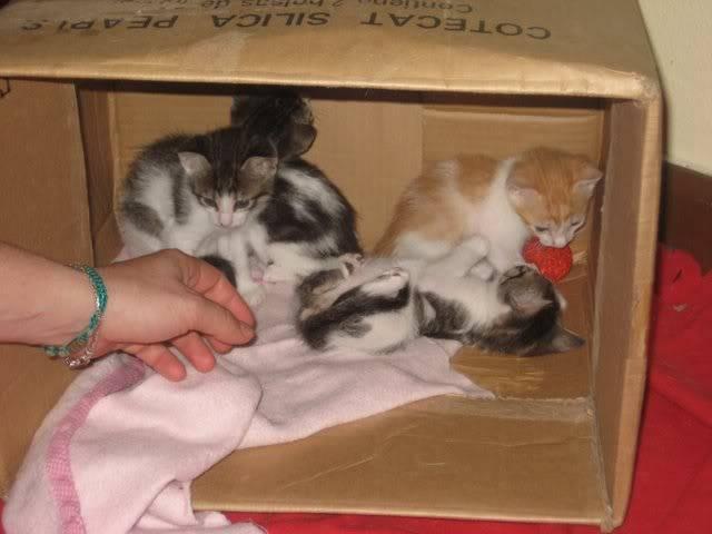 Cuatro bebitos en adopción (CF-Asturias) IMG_5399
