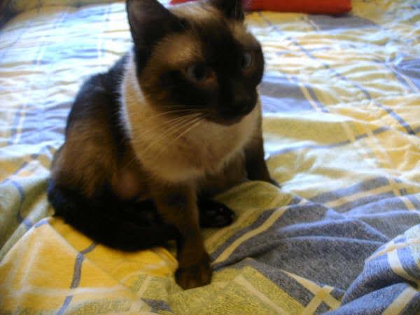 Cinco gatines víctimas del abandono – CF ASTURIAS Deysi