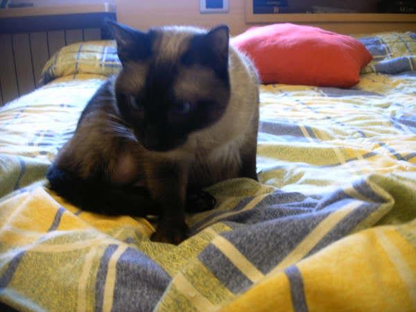 Cinco gatines víctimas del abandono – CF ASTURIAS Deysi1