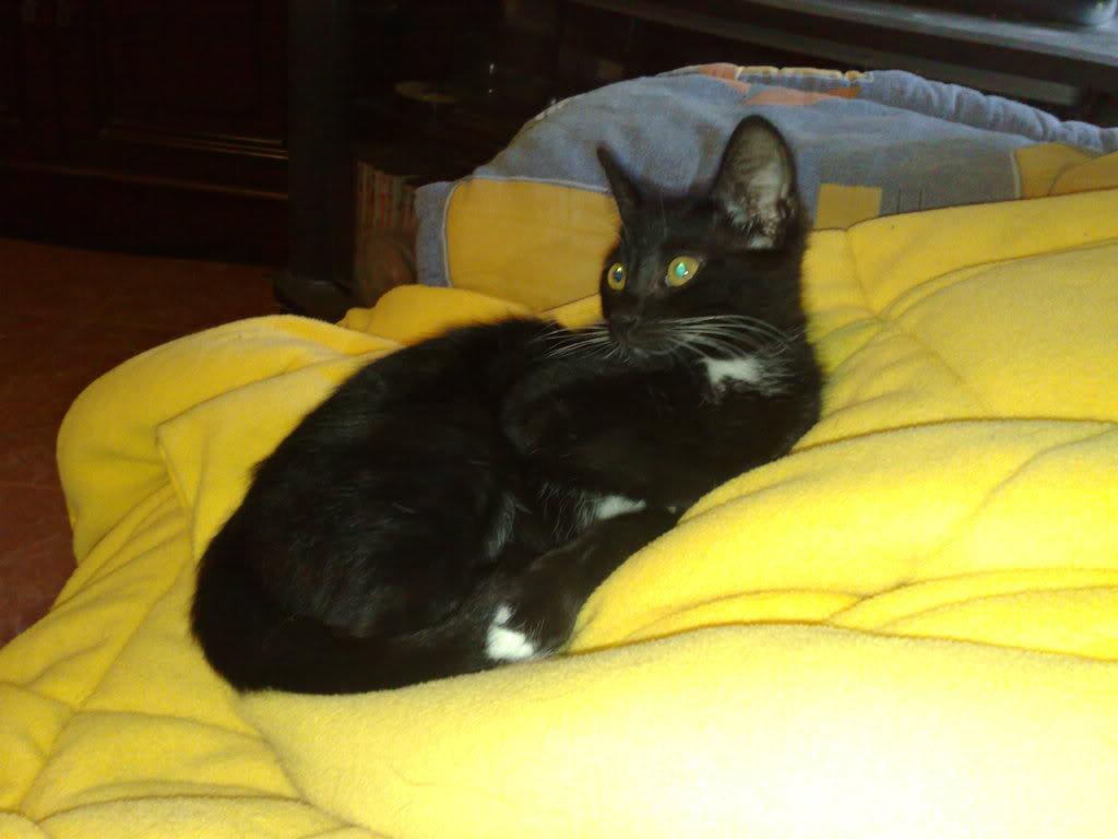 Cinco gatines víctimas del abandono – CF ASTURIAS Isidoro1