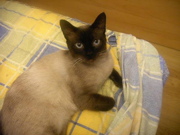 Cinco gatines víctimas del abandono – CF ASTURIAS Muriel