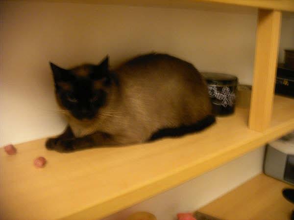 Cinco gatines víctimas del abandono – CF ASTURIAS Muriel2