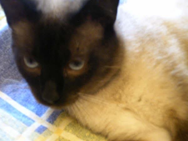 Cinco gatines víctimas del abandono – CF ASTURIAS Muriel4