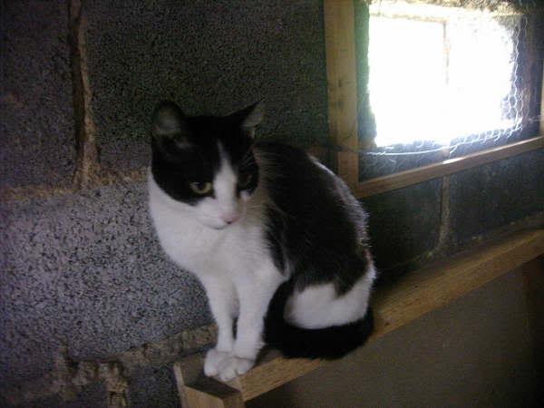 Cinco gatines víctimas del abandono – CF ASTURIAS Nerina