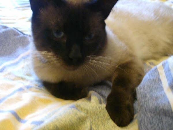 Cinco gatines víctimas del abandono – CF ASTURIAS Pancho