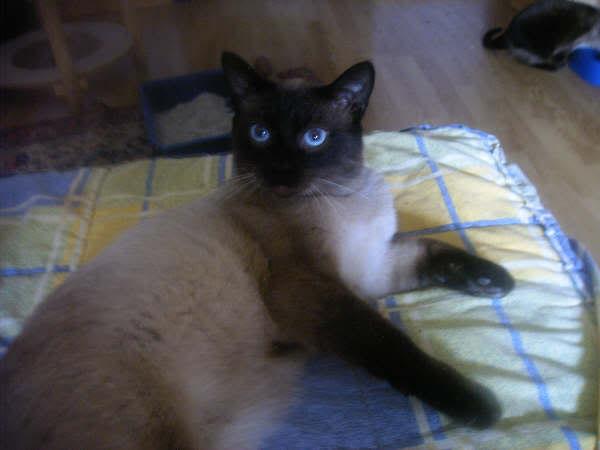 Cinco gatines víctimas del abandono – CF ASTURIAS Pancho3