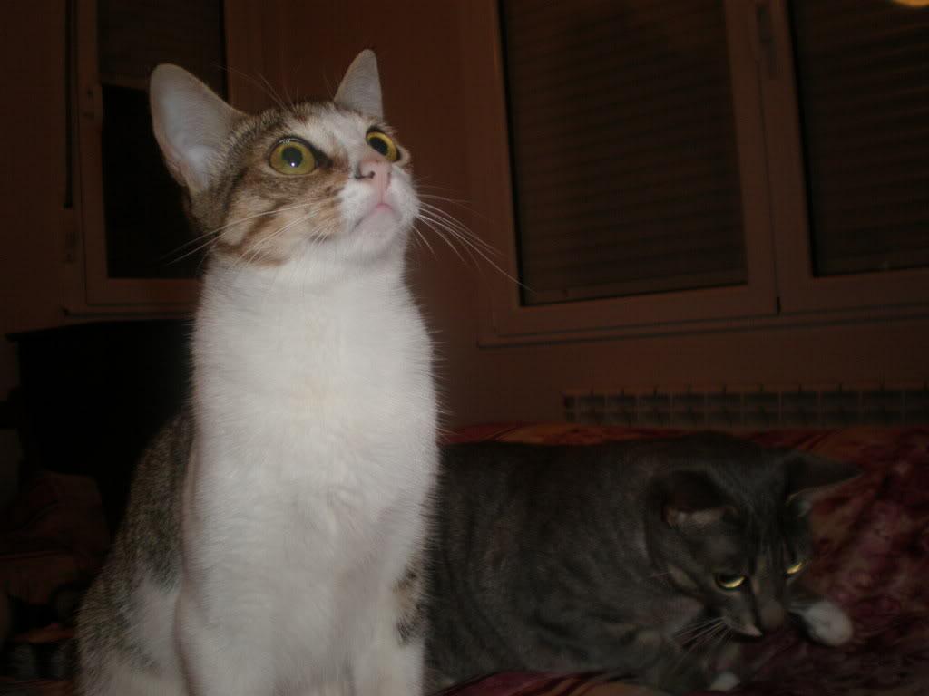 Iduna y Laya, compañeras inseparables en adopción (CF-ASTURIAS) P8120830