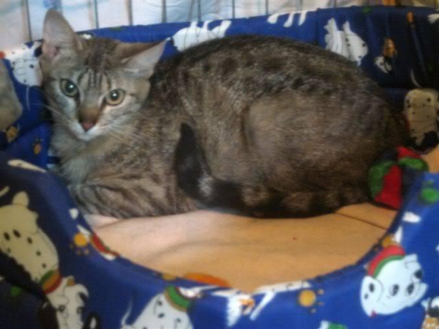 Juno y sus bebés en adopción – CF ASTURIAS JUNO1-1