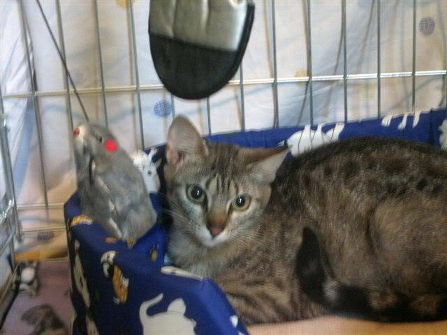 Juno y sus bebés en adopción – CF ASTURIAS JUNO2