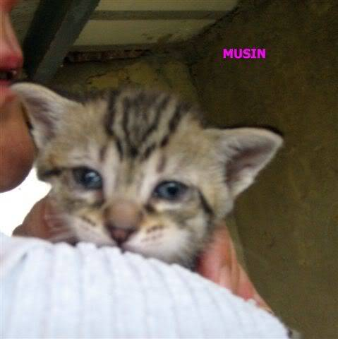 Juno y sus bebés en adopción – CF ASTURIAS MUSIN4