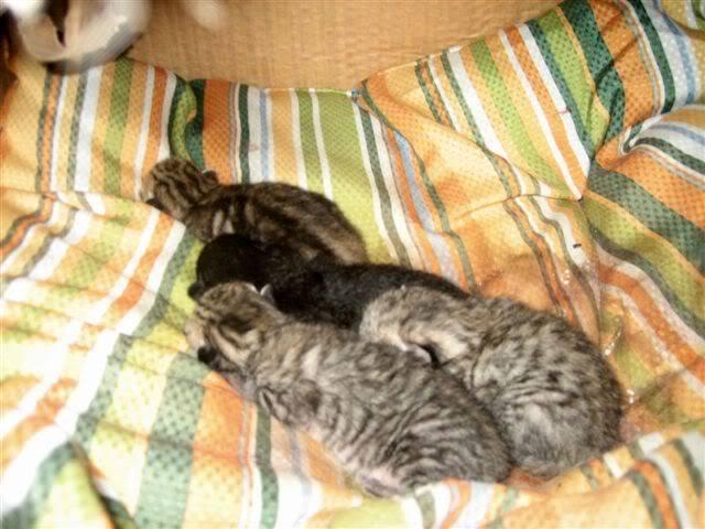 Juno y sus bebés en adopción – CF ASTURIAS PeluchinosdeJuno