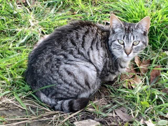 Marga, una gatina que te llegará al corazón – CF ASTURIAS Marga