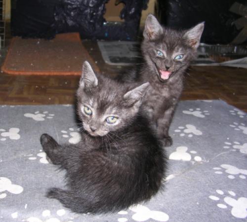 Pino y Kino, bebés en adopción - CF ASTURIAS 125259181215818243