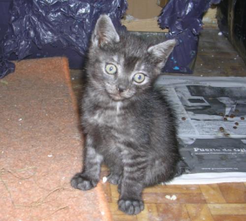 Pino y Kino, bebés en adopción - CF ASTURIAS 125259190916145354