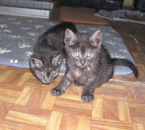 Pino y Kino, bebés en adopción - CF ASTURIAS 125259197716475212