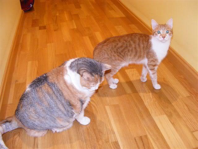 Lola y Mia, necesitan un hogar - CF ASTURIAS Mia_y_Lola