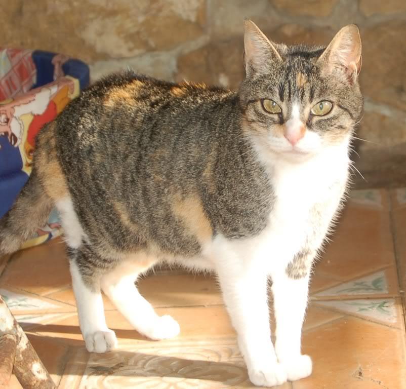 NORA, una gatina muy especial - CF ASTURIAS Nora