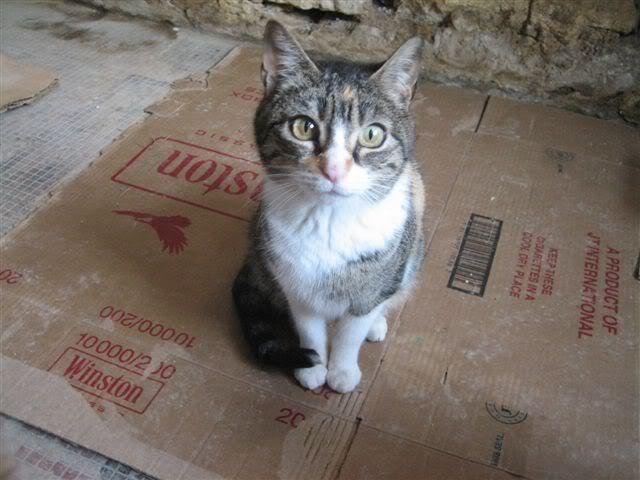 NORA, una gatina muy especial - CF ASTURIAS Nora_1