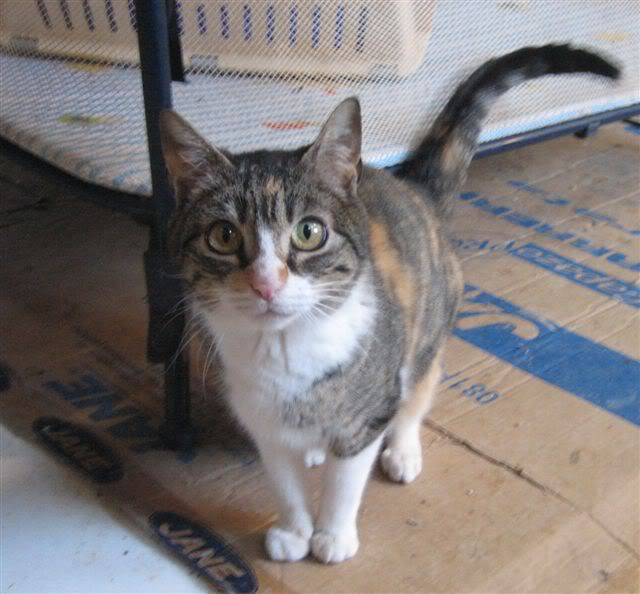 NORA, una gatina muy especial - CF ASTURIAS Nora_1_