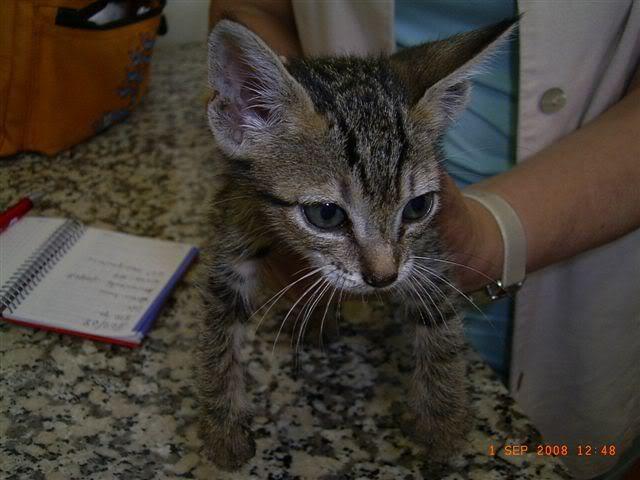 LOLA, mini gatina en adopción.***ADOPTADA*** RIMG1336
