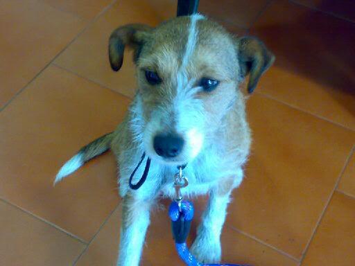 Xana, perrina buscando hogar – CF Asturias Xana