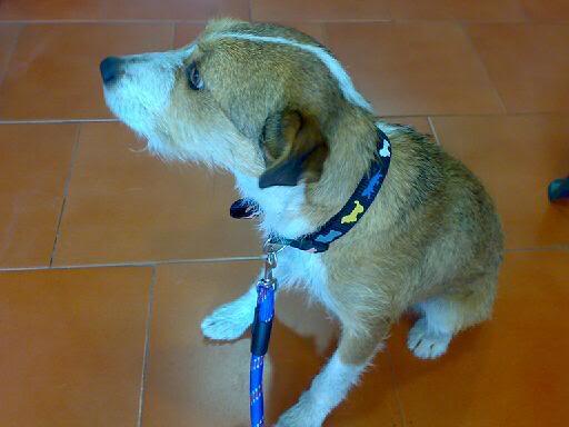 Xana, perrina buscando hogar – CF Asturias XanaenIcaro