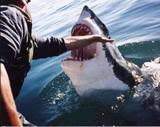 Fotos graciosas! Th98128_shark_122_862lo