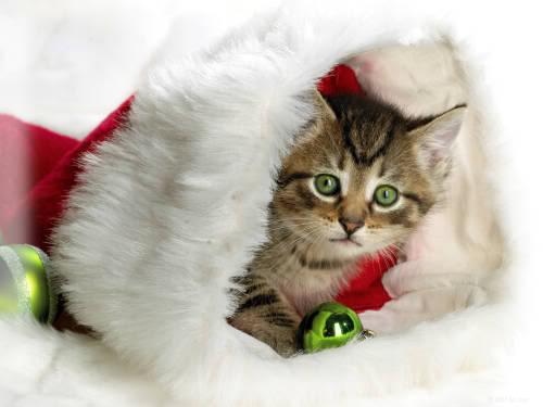 Praznična Božično-novoletna ozadja za na vaš računalnik (wallpapers) 2010_1a