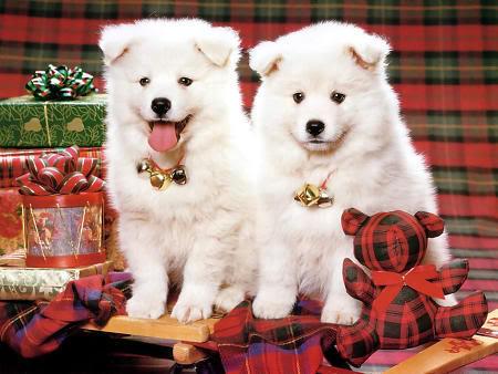 Praznična Božično-novoletna ozadja za na vaš računalnik (wallpapers) Bozic14s