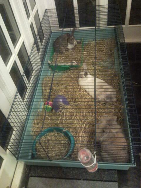 LARGE indoor cages!! DalerABS017