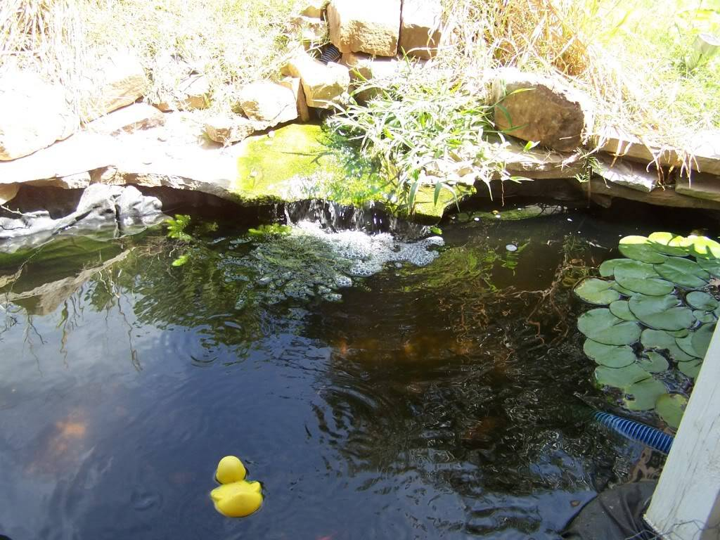 looking for some DIY stuff for my pond 000_7043