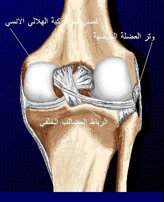 17f43897b شرح جسم الانسان بالصور لطلاب الطب 32